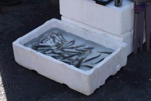 Свежепойманная в Босфоре рыбка