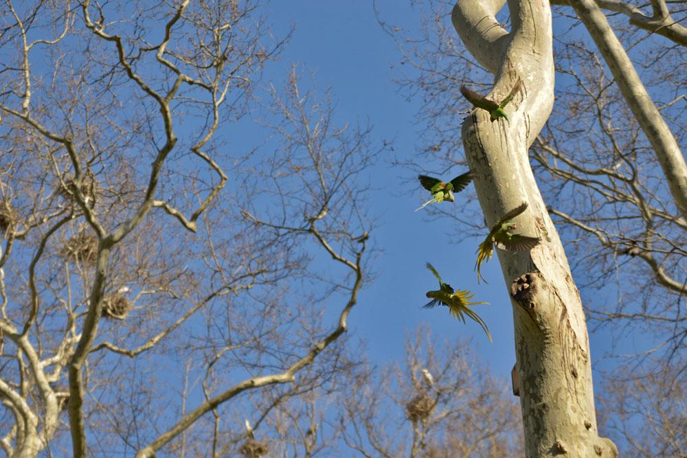 Парк Гюльхане - попугаи