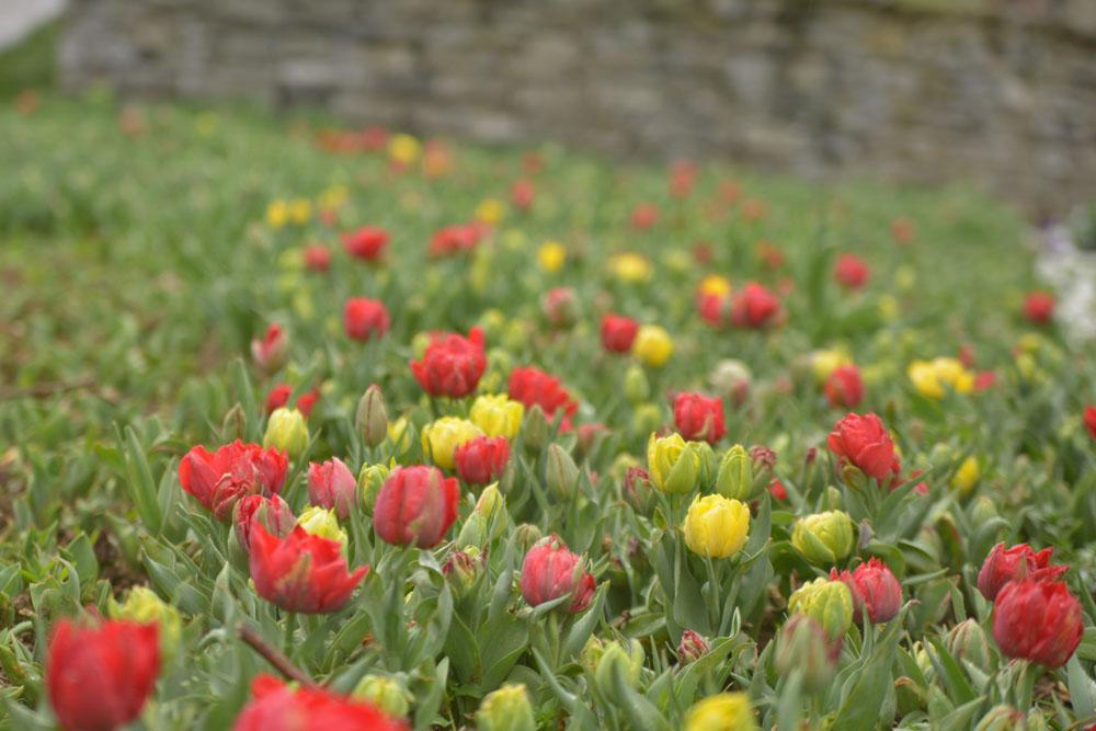 Парк Гюльхане - тюльпаны