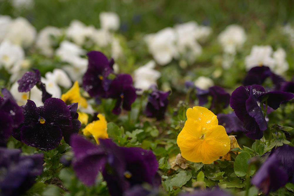 Цветы Парка Гюльхане
