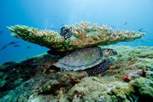 Острые кораллы