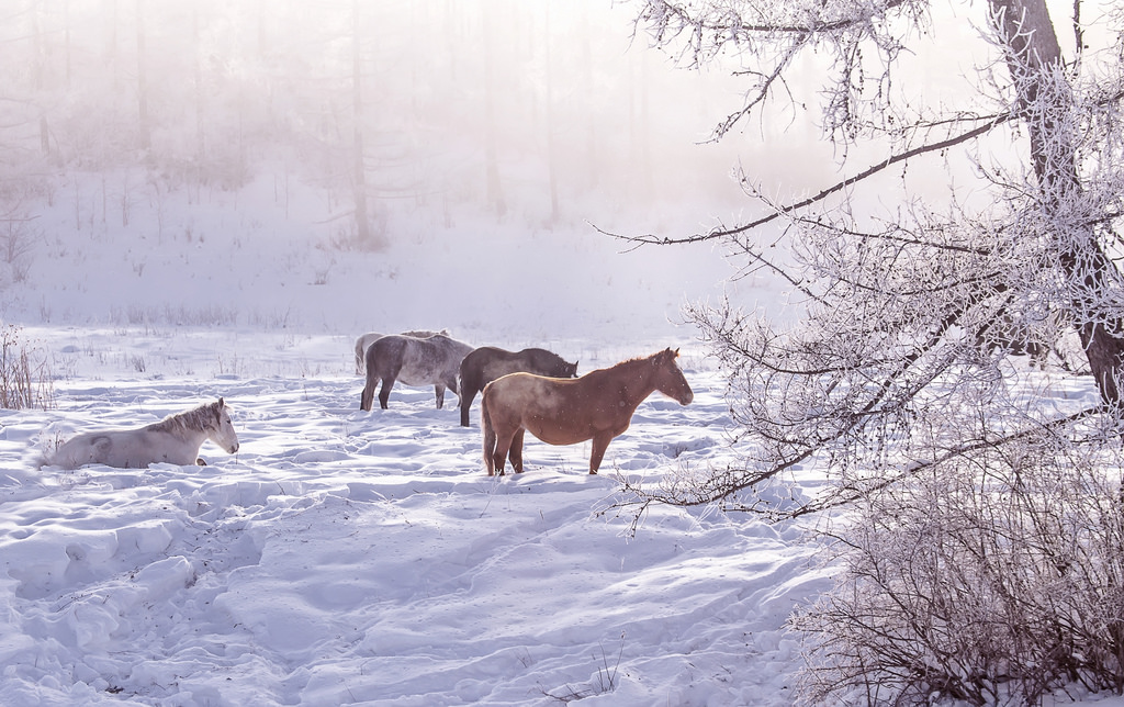 Лошади в снегу