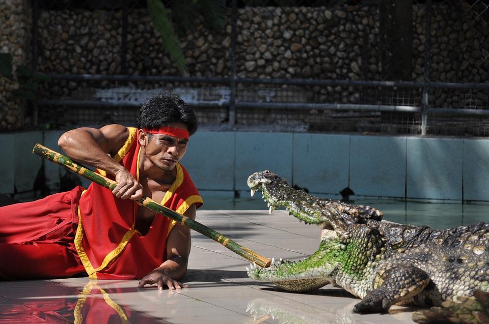 Дрессировщик с крокодилом
