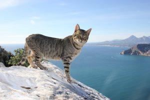 Кот на скалах