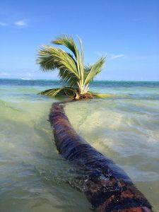 Пальма в воде