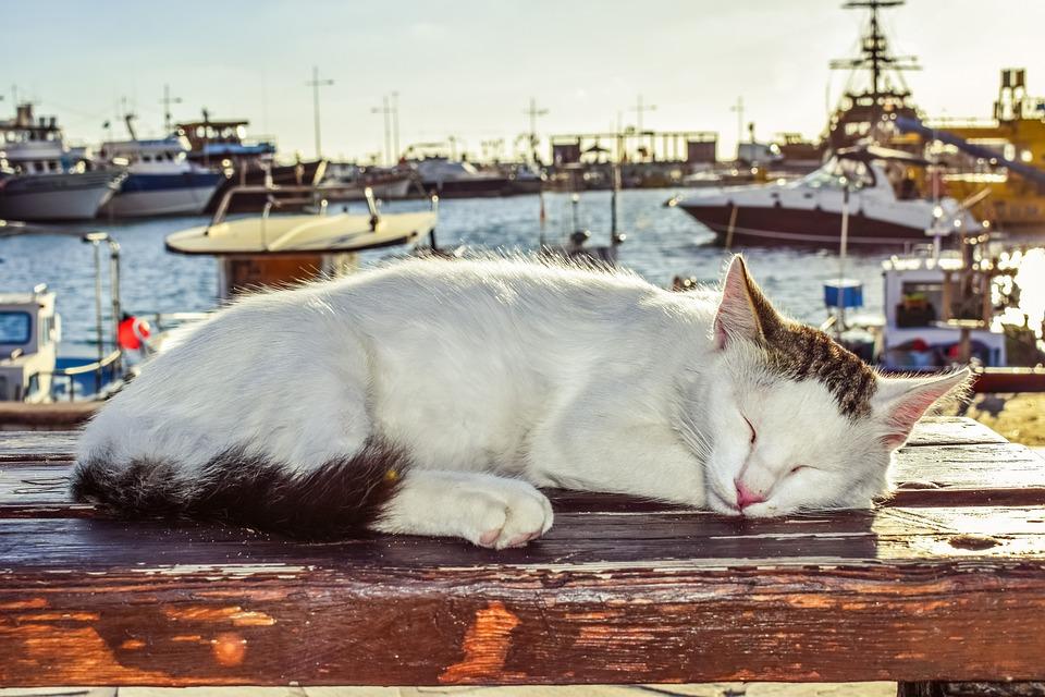 Коты в Айа-Напе