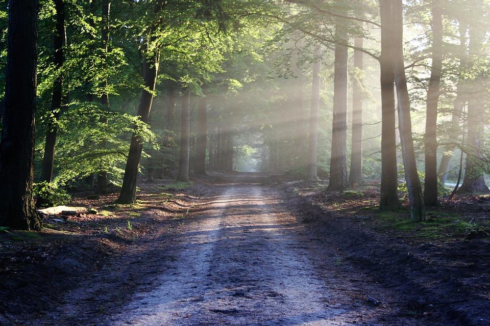 Дорога на природу
