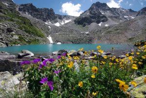 Горы и цветы