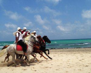 Тунис соревнования на верблюдах
