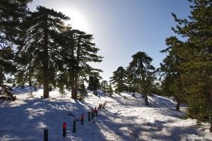 в январе в горах Кипра лежит снег
