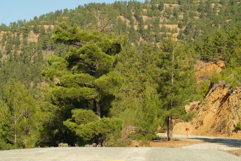 Дороги на Кипре