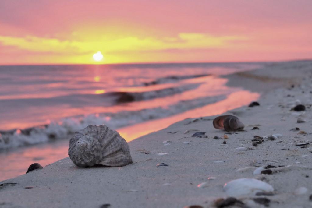 остров Джарылгач закат