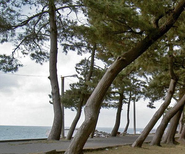 Кобулети - пляж и сосны