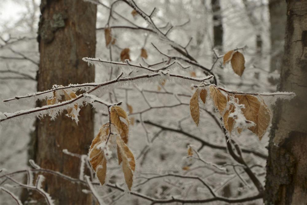 Замерзший лес