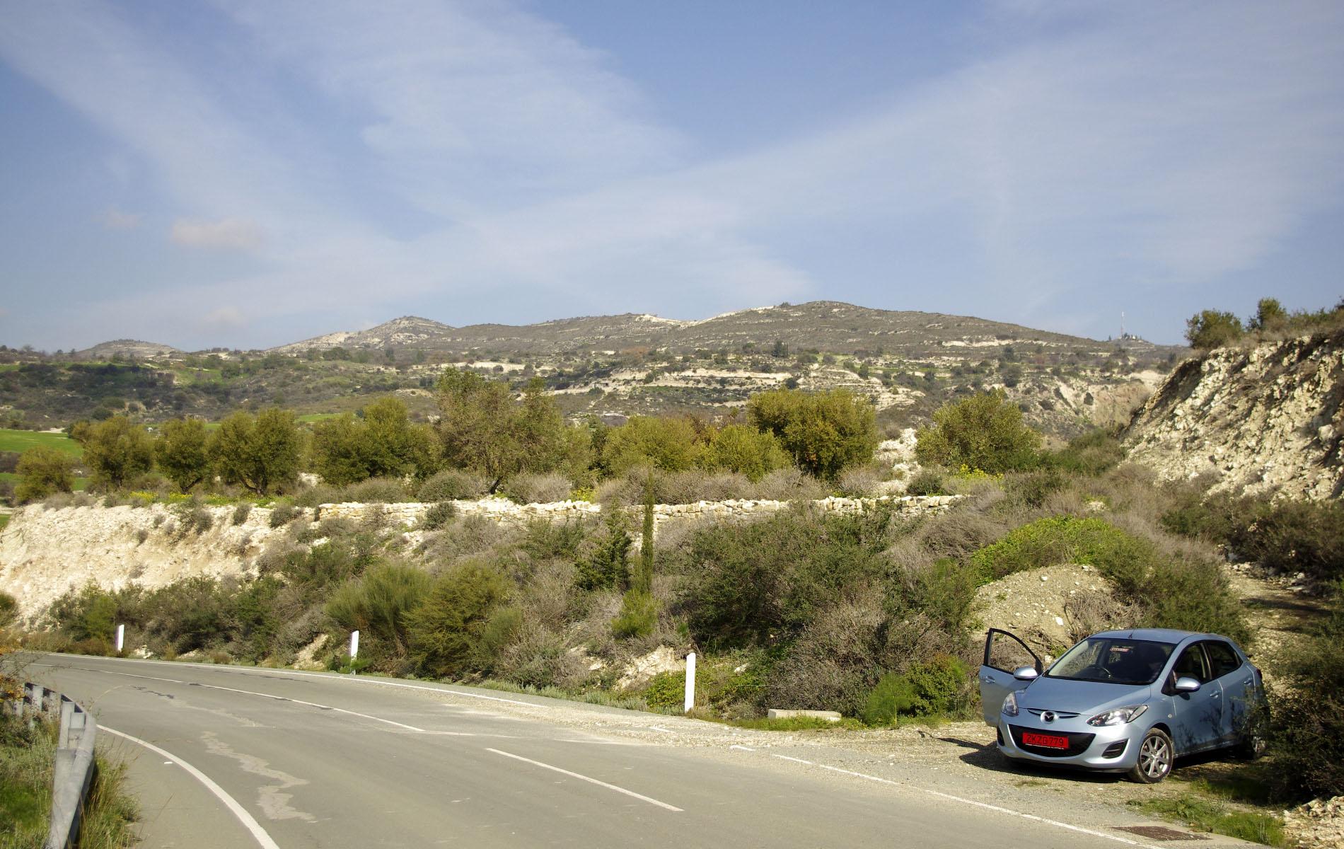 На машине по Кипру, оливковая роща над дорогой