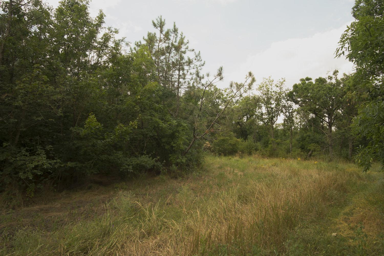Старо-Бердянский лес