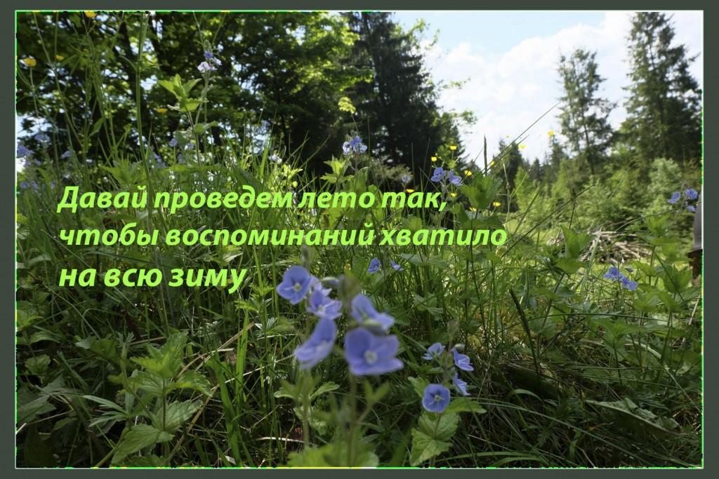 summer-motiv
